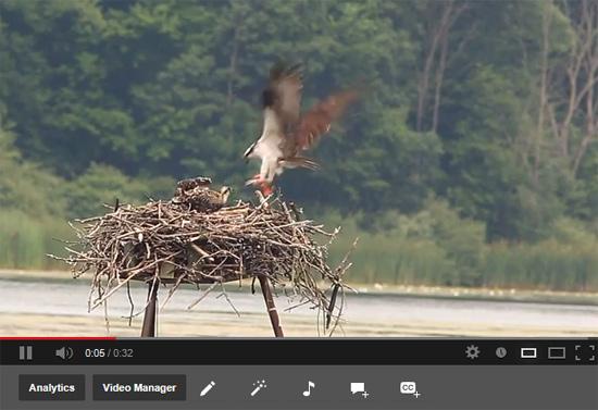 http://www.a2.com/images/osprey.jpg